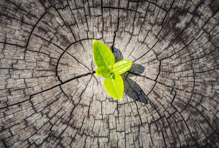 Agility & Resilience